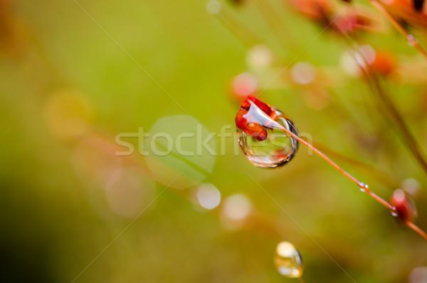 Trawy mech kroplami wody charakter wody ogród Zdjęcia stock © sweetcrisis