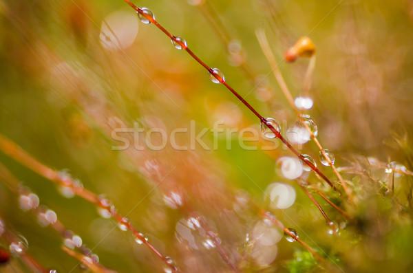 Foto stock: Grama · musgo · gotas · de · água · natureza · água · jardim