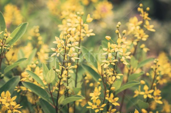 Flor amarela vintage pequeno jardim natureza parque Foto stock © sweetcrisis