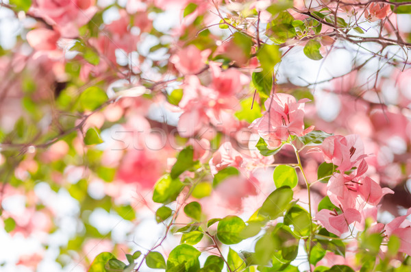 Papír virágok kert természet park tavasz Stock fotó © sweetcrisis