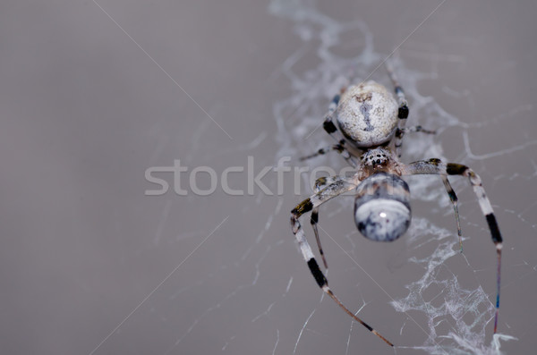 spider in nature Stock photo © sweetcrisis