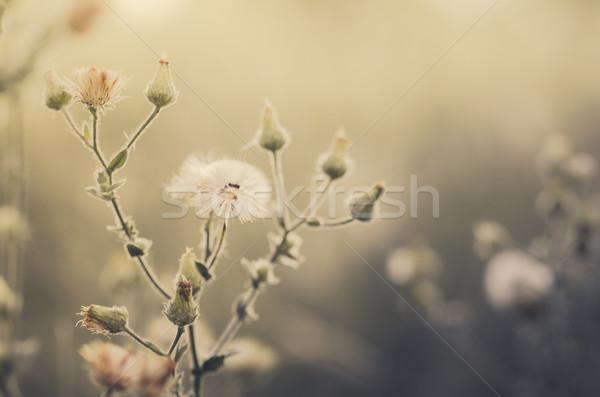 花 工場 草 雑草 自然 庭園 ストックフォト © sweetcrisis