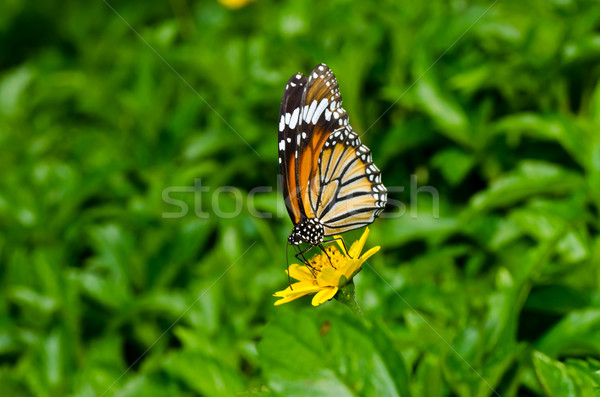 Stock photo: butterfly in green nature