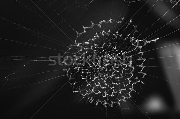 Teia da aranha preto e branco natureza rede preto escuro Foto stock © sweetcrisis