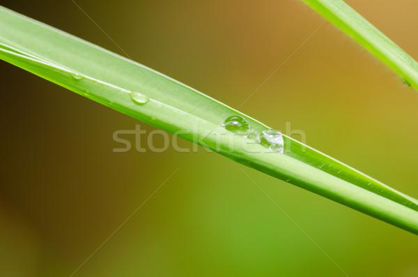 Levél vízcseppek természet tavasz fű kert Stock fotó © sweetcrisis