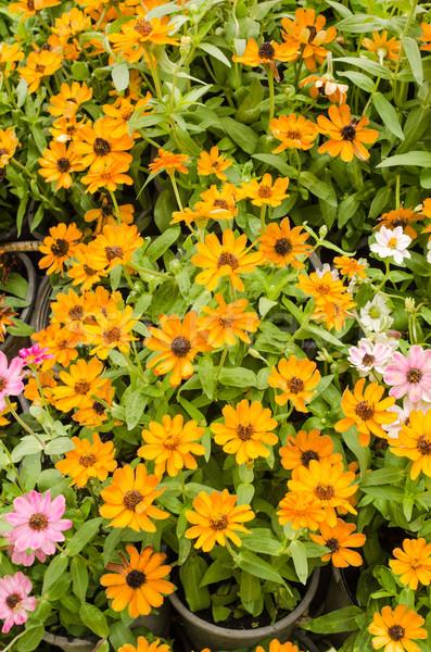 花 庭園 自然 公園 花 美 ストックフォト © sweetcrisis