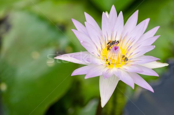 Lótusz víz liliom virág tavacska természet Stock fotó © sweetcrisis