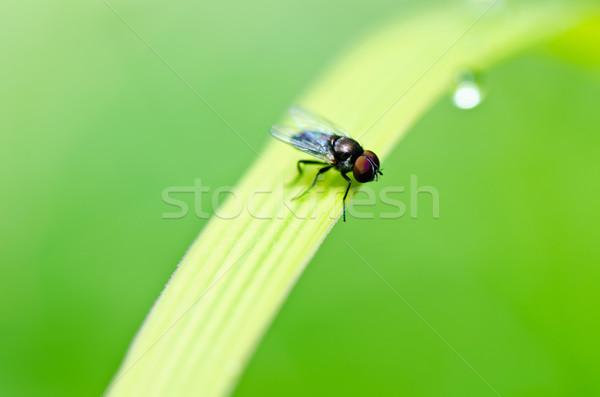 Foto stock: Voar · verde · natureza · cidade · comida · casa