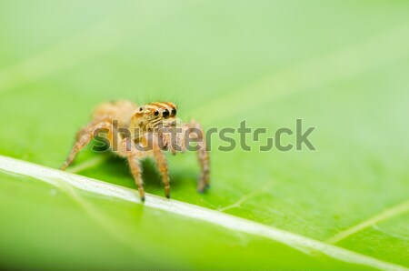 orange beetle in green nature Stock photo © sweetcrisis