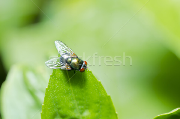 Stock photo: fly in nature or in the city