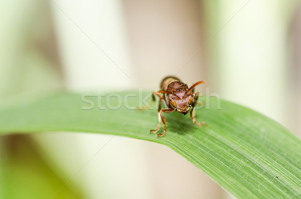 ワスプ マクロ 緑 自然 庭園 ストックフォト © sweetcrisis