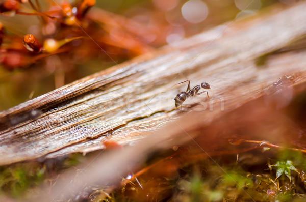 アリ 緑 自然 庭園 ワーカー 黒 ストックフォト © sweetcrisis