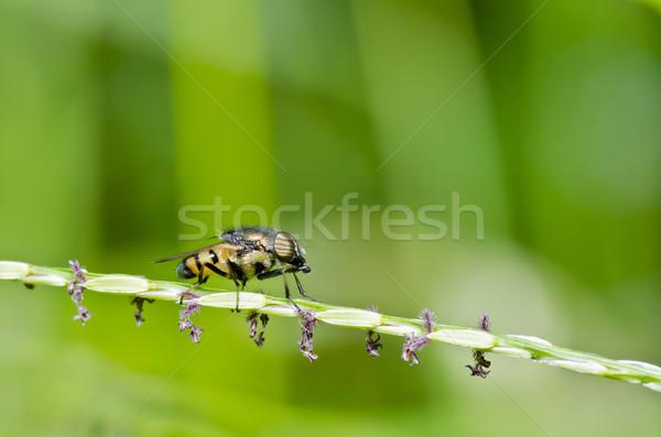 Bloem bestanden vruchten tuin groene natuur Stockfoto © sweetcrisis