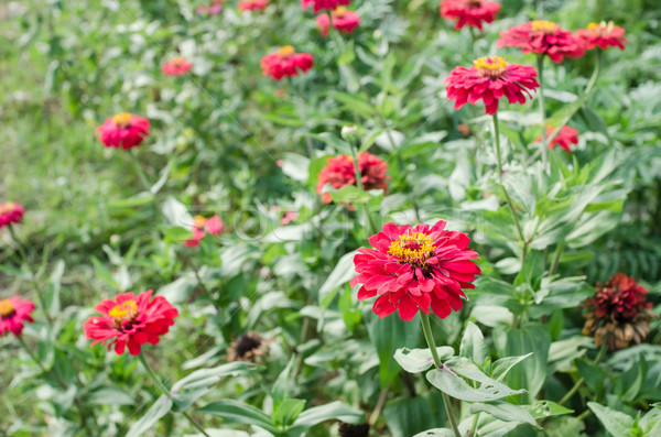 Flor jardim natureza parque beleza verão Foto stock © sweetcrisis