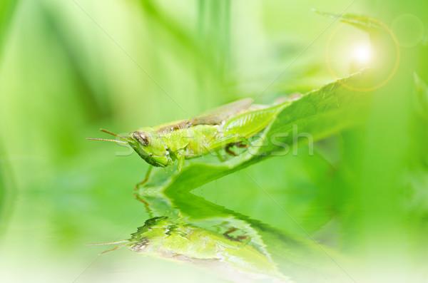 グラスホッパー 緑 自然 庭園 食品 色 ストックフォト © sweetcrisis