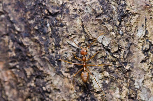 Piros hangya zöld természet Stock fotó © sweetcrisis