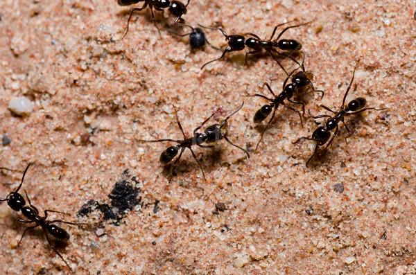 черный муравей зеленый природы саду Сток-фото © sweetcrisis