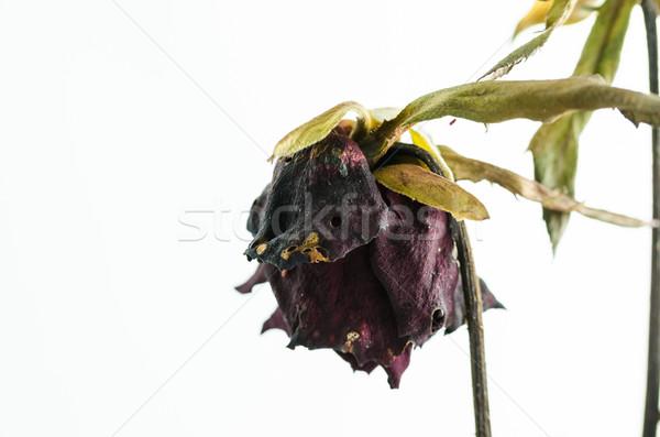 バラ 花 自然 愛 背景 ストックフォト © sweetcrisis