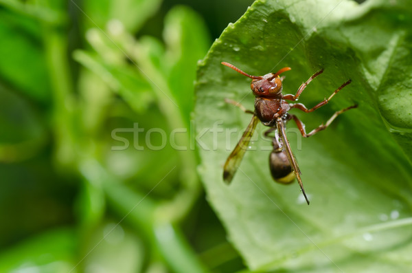 wasp in green nature or in garden Stock photo © sweetcrisis