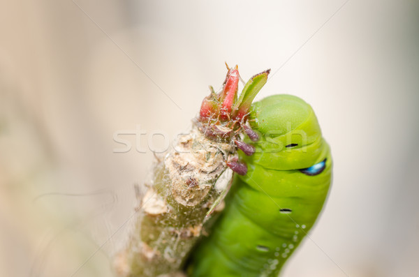 Green worm with leaves Stock photo © sweetcrisis