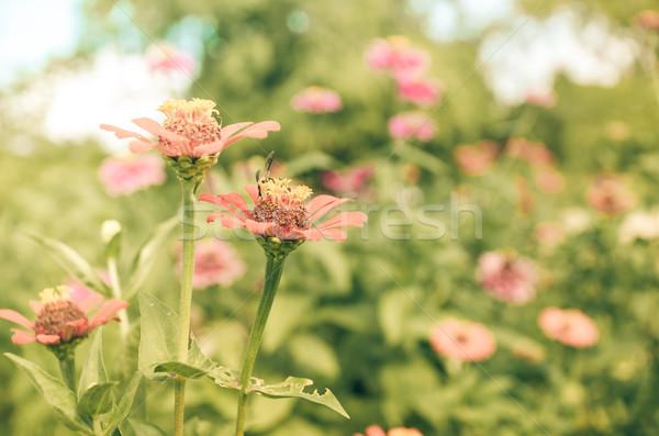 цветок Vintage саду природы парка красоту Сток-фото © sweetcrisis
