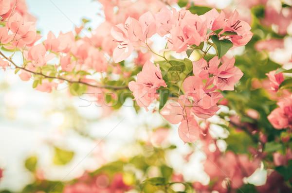 бумаги цветы Vintage саду природы парка Сток-фото © sweetcrisis