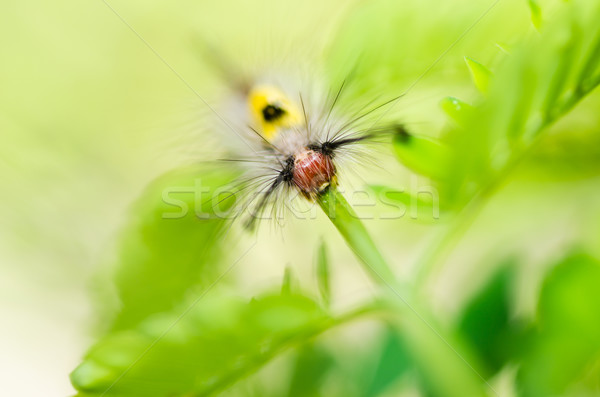 Foto stock: Verme · verde · natureza · jardim · comida · abelha