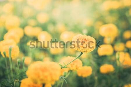 Foto stock: Flor · vintage · natureza · jardim · casamento · cabeça
