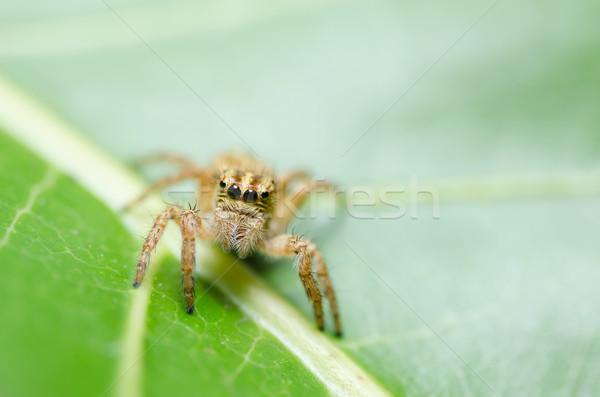 Spin groene natuur macro shot angst Stockfoto © sweetcrisis