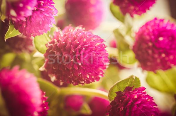 Mundo soltero botón flor vintage color Foto stock © sweetcrisis