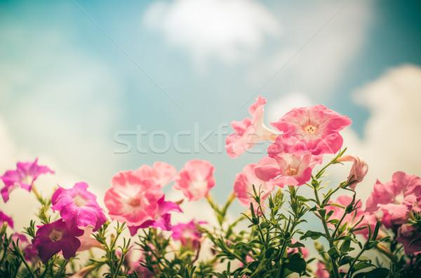 Klasszikus kert természet park levél nyár Stock fotó © sweetcrisis
