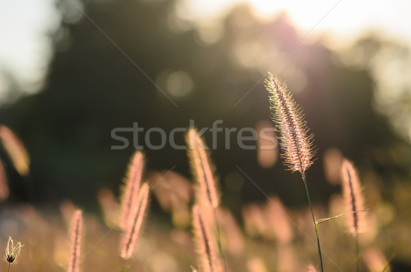 雑草 自然 花 緑 愛 草 ストックフォト © sweetcrisis