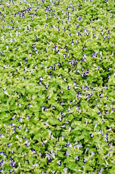 花 庭園 自然 公園 葉 背景 ストックフォト © sweetcrisis