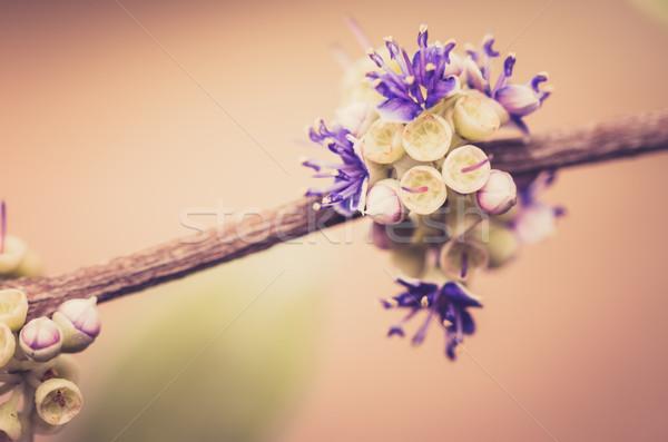 Pequeno flor vintage jardim de flores natureza parque Foto stock © sweetcrisis