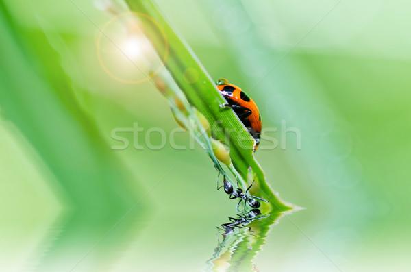 Stock fotó: Katicabogár · zöld · természet · kert · tavasz · szem