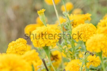 花 ヴィンテージ 自然 庭園 結婚式 頭 ストックフォト © sweetcrisis
