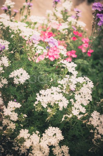 Pequeno flores vintage jardim natureza Foto stock © sweetcrisis