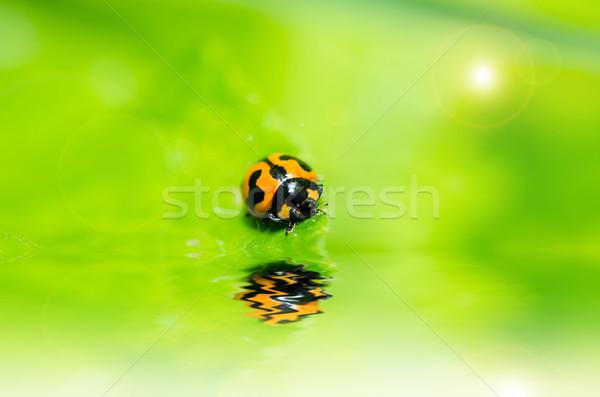 ストックフォト: てんとう虫 · マクロ · 緑 · 自然 · 庭園 · 春