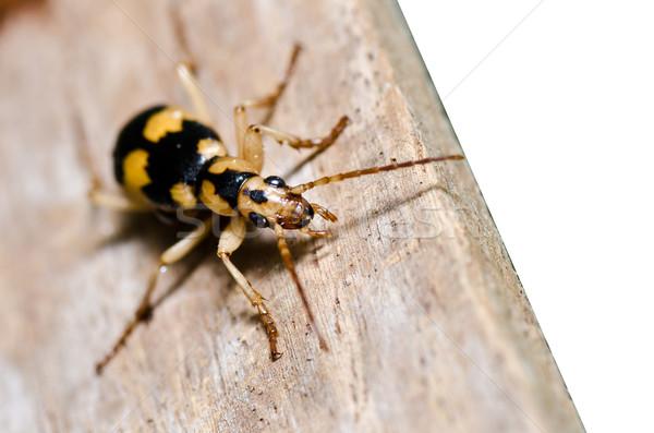 Bruin bug hout geïsoleerd groene natuur Stockfoto © sweetcrisis