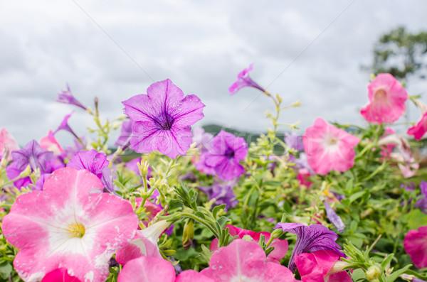 Kert természet park levél nyár zöld Stock fotó © sweetcrisis