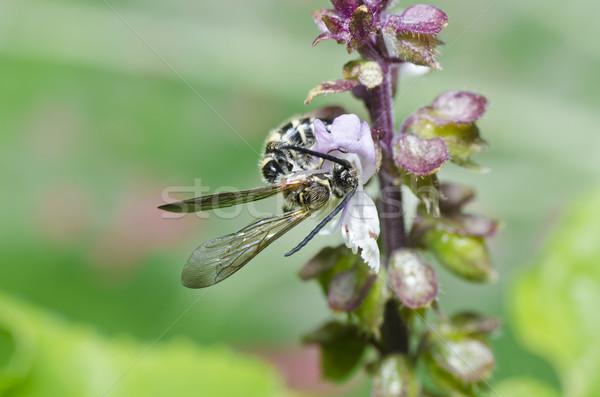 Vespa verde natureza jardim ouro abelha Foto stock © sweetcrisis