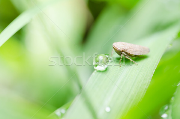 Aphid on the leaf Stock photo © sweetcrisis