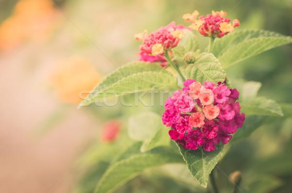 セージ 布 金 ヴィンテージ ストックフォト © sweetcrisis
