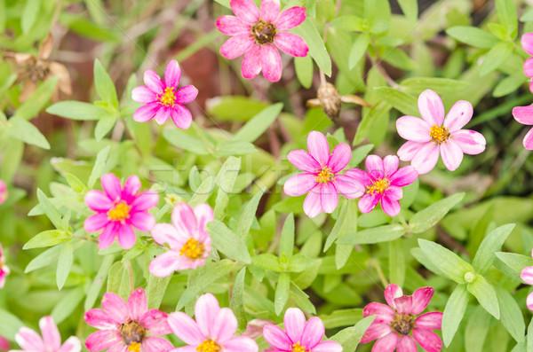 花 緑 庭園 自然 公園 幸せ ストックフォト © sweetcrisis