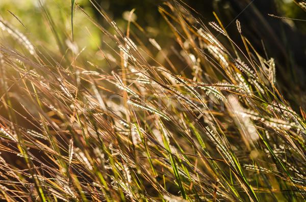 花 雑草 庭園 自然 公園 ストックフォト © sweetcrisis