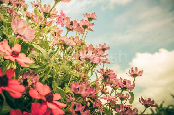 çiçekler bağbozumu bahçe doğa park çiçek Stok fotoğraf © sweetcrisis