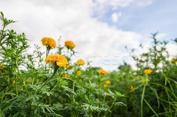 花 自然 庭園 頭 工場 アジア ストックフォト © sweetcrisis