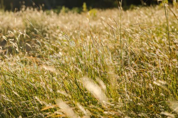 Kicsi virág gaz kert természet park Stock fotó © sweetcrisis