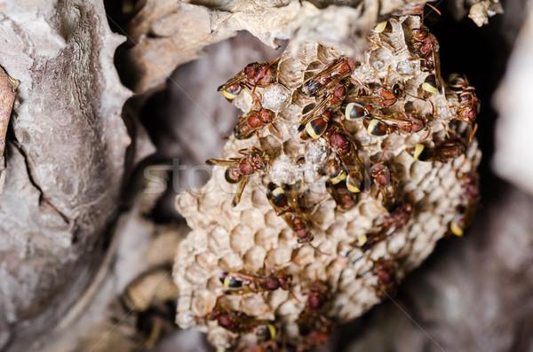 Ninho marrom colônia inseto branco pormenor Foto stock © sweetcrisis