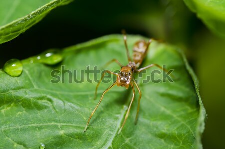 mosquito in forest or in the garden Stock photo © sweetcrisis